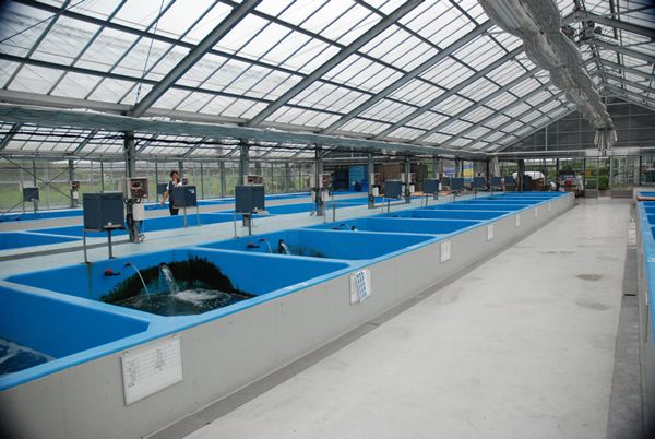 Image gallery narita koi farm for Japanese koi centre